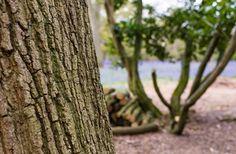 Stunning Summer Forest  #Wood #Forest #BritishForest #LiveEdge #British #ModernLiving #Handcraft #BritishDesign #Nature #Natural #Forest #Wood #Autumn #Countryside #InteriorDesign #Bespoke