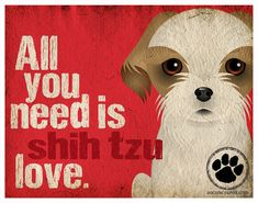 Shih Tzu Art Print  All You Need is Shih Tzu