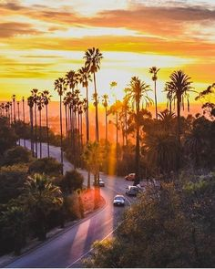 New Travel Usa California Los Angeles Palm Trees 24 Ideas California Sunset, California Travel, New Travel, Travel Usa, Los Angeles Palm Trees, Sunrise Wallpaper, Sunset Silhouette, Travel Wallpaper, Aesthetic Wallpapers