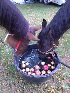Major bobbing for apples.. he got one