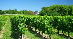 Saint Emilion Vineyards Bordeaux Vineyards, Saint Emilion, Saints, Outdoor, Images, Google, Grape Vines, Pen Pal Letters, Search