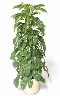 Interior Plantscaping by GreatScapes & More :: Richmond Virginia Garden Plants, House Plants, Living Room Upgrades, Richmond Virginia, My Flower, Natural Light, Planting Flowers, Greenery, Flora