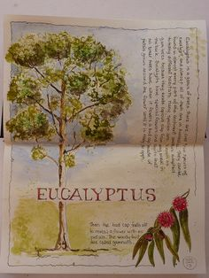 Eucalyptus, notes. Nature, journal, sketchbook, notebook, dairy, words and images, drawing.