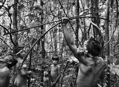 *To the Awá, the land has one name: Harakwá, meaning, the place that we know.  They live by hunting for wild pigs, tapirs and monkeys, traveling through the rainforest with 6-foot bows, and by gathering forest produce: babaçu nuts, açaí berries, and honey.  Picture © Sebastiao Salgado/Amazonas/nbpictures