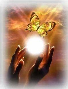 (4) Abra Seu Coração!!! Voe Como As Borboletas.