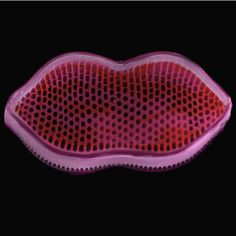 Oceanographer Paul Hargreaves and artist Faye Darling used an electron microscope to capture this image of a diatom – a tiny single-celled marine algae – that looks exactly like lips.