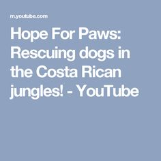 Hope For Paws: Rescuing dogs in the Costa Rican jungles! - YouTube