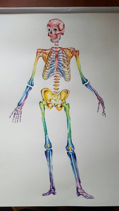 Watercolour Anatomy Art Complete Skeleton
