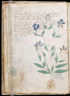 manuscrito020.jpg (1125×1536)