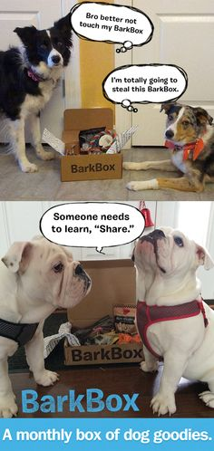 Monthly subscription of dog products  Barkbox