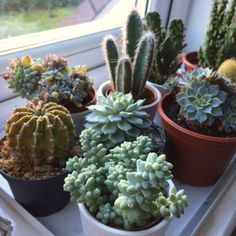 Some people enjoy growing flowers and other forms of plant life as well. Cacti And Succulents, Cactus Plants, Garden Plants, Indoor Plants, Indoor Gardening Supplies, Plant Aesthetic, Plants Are Friends, Cactus Y Suculentas, Botany