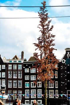 Lace & Lilacs » Amsterdam, the Netherlands