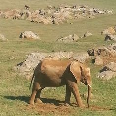 #elefante #Cabarceno #Cantabria