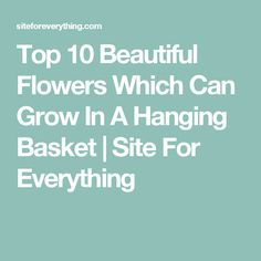 Top 10 Beautiful Flowers Which Can Grow In A Hanging Basket | Site For Everything