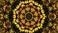 Autumn Gold Kaleido 010 HD, 4K Stock Video by alunablue https://www.pond5.com/stock-footage/75461981/autumn-gold-kaleido-010-hd-4k-stock-video.html?utm_content=bufferfd489&utm_medium=social&utm_source=pinterest.com&utm_campaign=buffer
