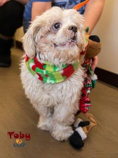 I found Toby on Petfinder Shih Tzu, Adoption, Meet, Dogs, Animals, Foster Care Adoption, Animales, Animaux, Pet Dogs