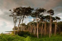 Weststrand auf dem Darß Dune, Tree Forest, North Sea, Baltic Sea, Science And Nature, Amazing Nature, Wonders Of The World, Places To See, Seaside
