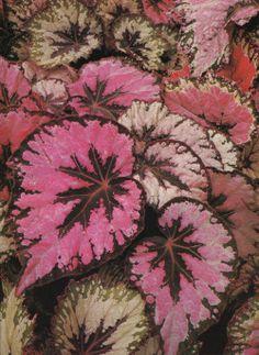 The Wonderful World of Indoor Plants, Ann Bonar, 1979