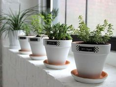 White Windowsill Herb Garden Pots : Indoor Windowsill Herb Garden You do not require a backyard to grow your herbs, you can make your very own compact windowsill herb garden. Creating a windowsill herb garden is simple and easy to do. Herb Garden Planter, Herb Garden In Kitchen, Herb Garden Design, Kitchen Herbs, Herb Planters, White Planters, Herb Pots, Garden Pots, Garden Types