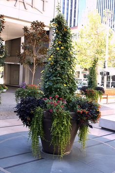 great container with a climbing vine as the center piece.