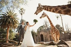 Zoo Wedding - Melbourne, Australia    Fantastic!