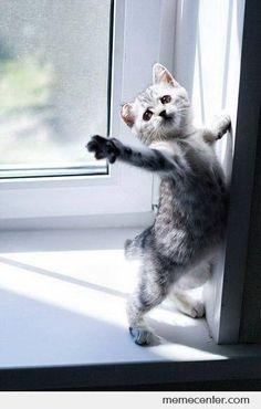 Over acting kitten. What light through yonder window breaks...