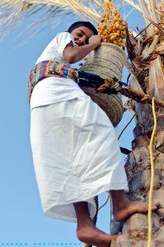 Oman | Dates Harvest. credit: Sanak Roy Choudhury. view on Fb https://www.facebook.com/OmanPocketGuide #oman #traveltooman