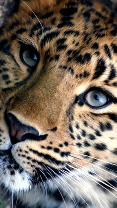 Just a mix.of me Just a mix. Big Cats, Cats And Kittens, Cute Cats, Nature Animals, Animals And Pets, Animals In The Wild, Beautiful Cats, Animals Beautiful, Regard Animal