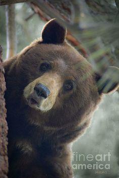 Bears endangered - ranking