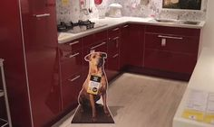 IKEAなどの家具店に等身大パネルを設置して、保護されている犬の里親を探すプロジェクト「Home for Hope」 in Singapore  via mifdesign_antenna