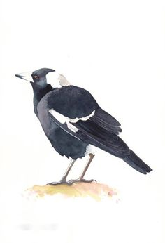 Items similar to Magpie Painting Bird art wildlife nature- print of watercolor painting 5 by 7 wall art print - bird art print - watercolor print on Etsy Watercolor Painting Techniques, Painting Prints, Wall Art Prints, Watercolor Paintings, Watercolours, Australian Animals, Australian Art, Bird Wall Art, Wildlife Paintings
