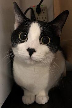 You found my super secret hiding spot - http://cutecatshq.com/cats/you-found-my-super-secret-hiding-spot/