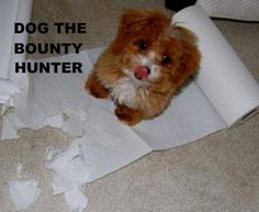 Funny pictures about Dog the Bounty Hunter. Oh, and cool pics about Dog the Bounty Hunter. Also, Dog the Bounty Hunter photos. Funny Captions, Funny Puns, Haha Funny, Funny Stuff, Funny Things, Dog Stuff, Funny Shit, Random Stuff, Funny Humor