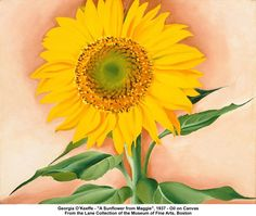 artwork: Georgia O'Keeffe - 'A Sunflower from Maggie', 1937
