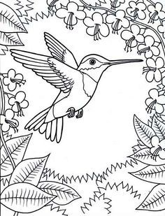 coloring pages hummingbirds | Hummingbird coloring, flower coloring ...