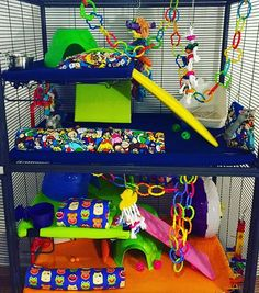 New cage set up for our babies ❤️ Check links in bio and custom-create your own… Pet Rats, Pets, Dumbo Rat, Gerbil, Hammocks, Chinchilla, Siamese, Our Baby, Guinea Pigs