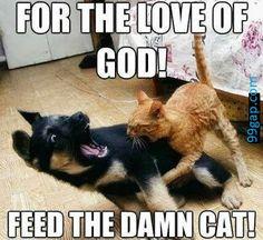 Funny Meme About Cat vs. Dog
