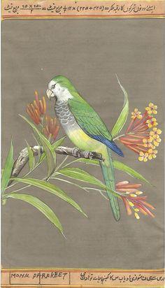 Monk Parakeet Exotic Bird Painting Rare Handmade India Miniature Ornithology Art