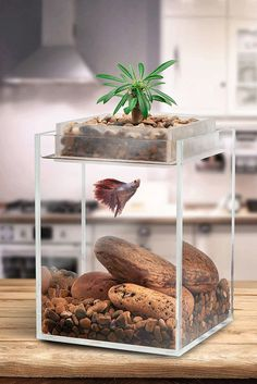 35 Modern Mini Aquarium Designs For Your Small Spaces | Home Design And Interior