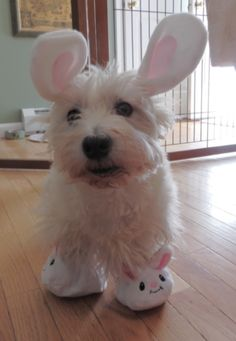 good-night doggie..I have the ears but where did you get those bunny slippers? I must have some made for my dog Jessie