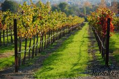 Ruby Hill Winery ~ Livermore Valley.
