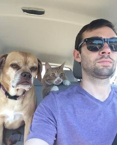"These dogs are like, ""Are we there yet?"" but also like, ""Woof woof"" (because they're dogs)."