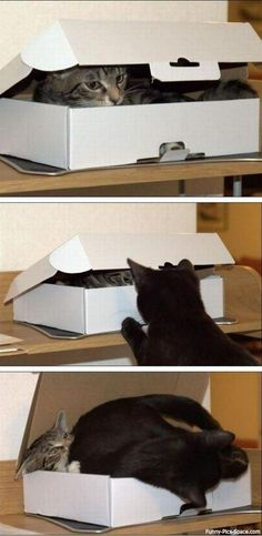 Funny Pictures Of The Day Vol. 176 (35 IMAGES) my cats would so do that too