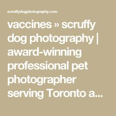 vaccines » scruffy dog photography | award-winning professional pet photographer serving Toronto and Ontario