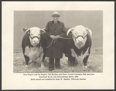 Date: 1933 This black and white photograph shows cattleman Robert H. Hazlett from El Dorado, Kansas with his Grand Champion bull and cow at the American Royal International Shows in Kansas City, Kansas.