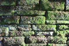 Mauer im Stadtpark