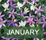 In The Garden This Month and Gardening Ideas  Good resource for monthly planting and plant care!