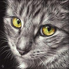 Katzen Zeichnung