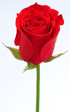 a rose.. simple steps on how to draw.. pin now, read later