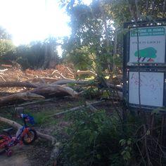 Continua il tour del degrado. Altro che Giubileo. Ormai quasi tutti i parchi di Roma sono in uno stato di abbandono sconcertante. Oggi siamo al Celio. Desolante lo stato di Villa Celimontana, un parco che era un fiore all'occhiello di Roma peraltro ristrutturato recentemente. Ora erba alta, molte siepi e piante secche e una parte non praticabile. Incredibile vedere alberi caduti proprio sulla pista ciclabile per bambini vicino all'area giochi. Sembra di essere nella giungla